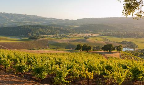 sonoma valley wine trolley 3